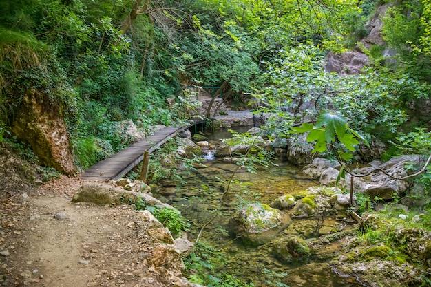 野生の森の小さな絵のような池。