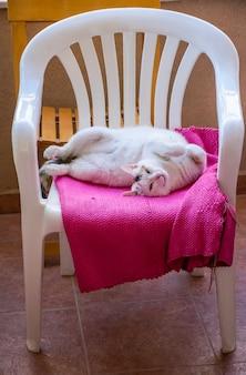 Сонный кот лежит спиной к пластиковому шезлонгу.