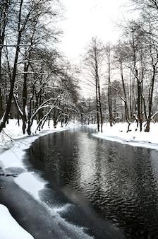 冬の森の美しい川