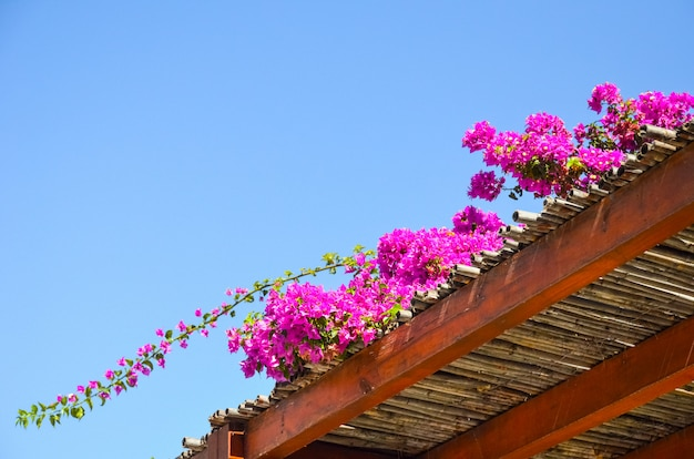 Замечательные цветы найдены в греции на острове