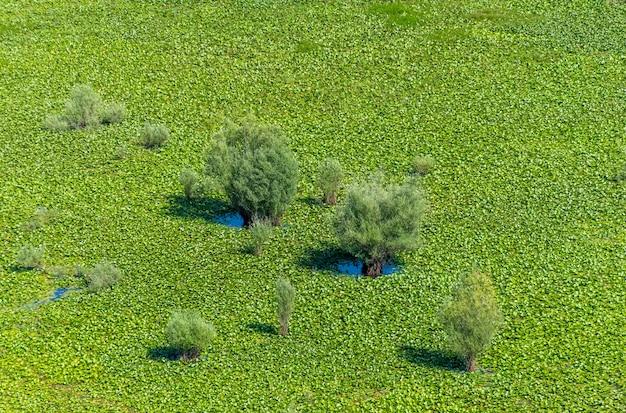 На большом зеленом болоте растут одинокие деревья.