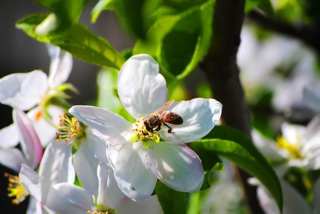 素敵な春の花のイチゴに蜂