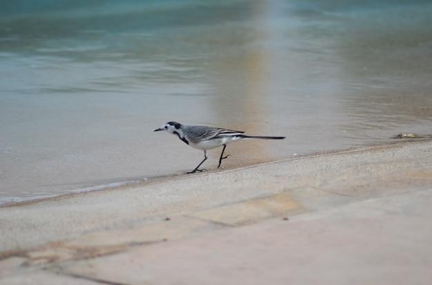Серая птица в египте возле бассейна