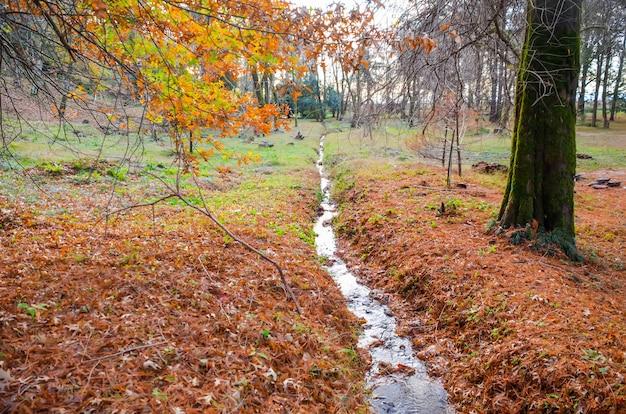 Небольшой ручей в ботаническом саду осенью. батуми, грузия.