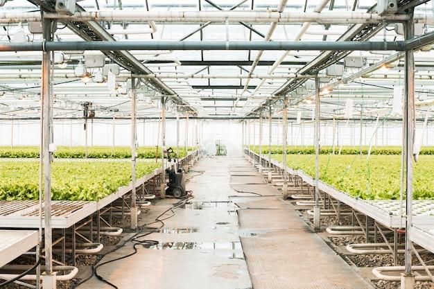 温室と緑の野菜。