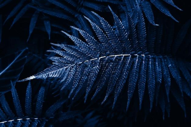 Тонированные тропические листья под цвет года: классический синий. фон листья декоративного папоротника в тропиках
