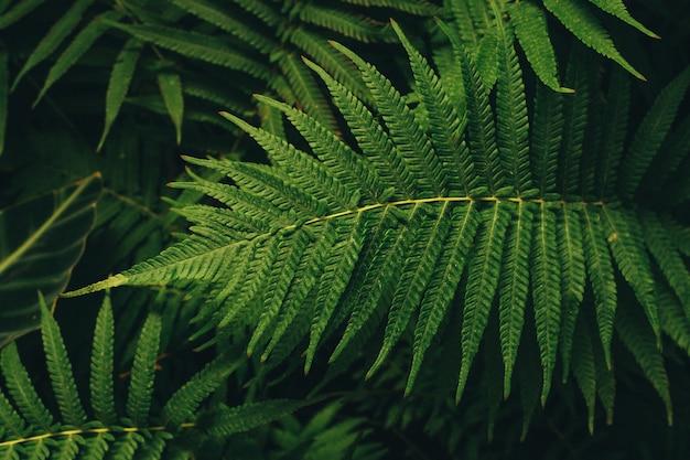 シダの美しい緑の葉。花緑の葉