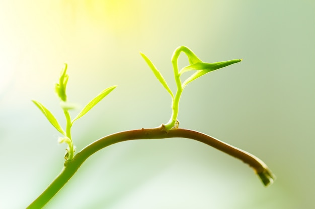 若い赤ちゃんの植物や花芽が枝から成長しています。新しい生命の概念、初め。コピースペースとクローズアップ。