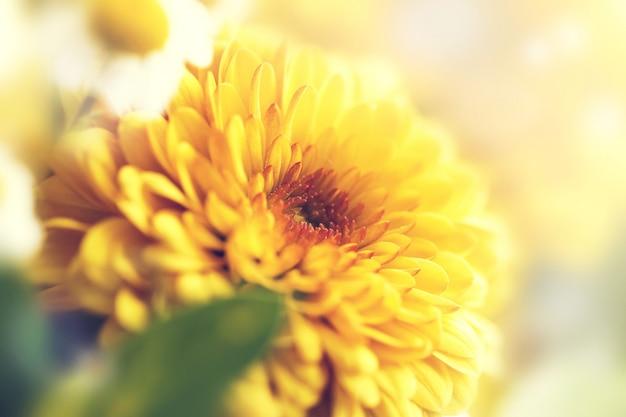 抽象芸術、明るい植物の季節