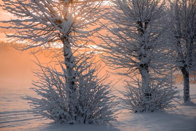 ラトビア、クリムルダの雪に覆われた冬の朝の風景