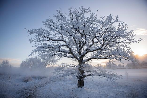 冬のワンダーランド