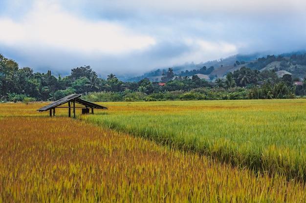 タイのフィールド