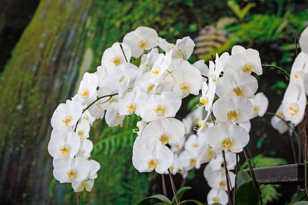 花屋で白い花