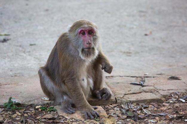 タイの路上で猿