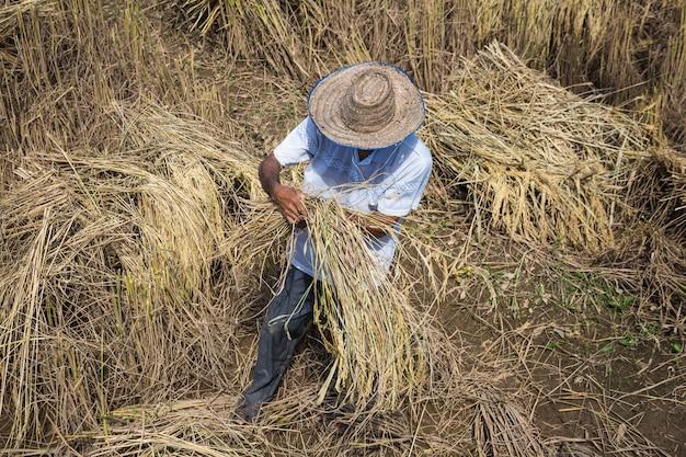 小麦を選ぶ男