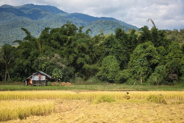 タイの発見