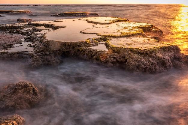 コケイスラエルと岩