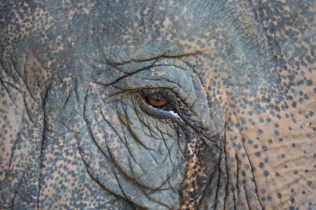 Глаз слона