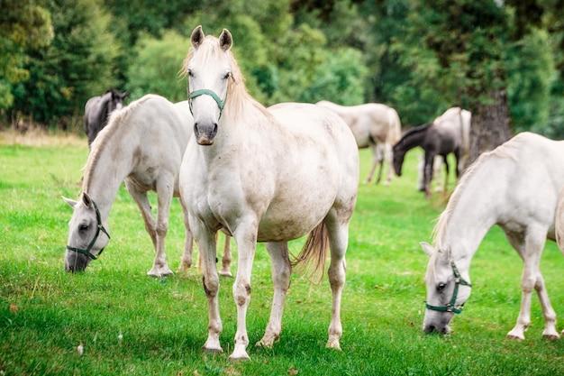白い馬が降り注ぐ雨