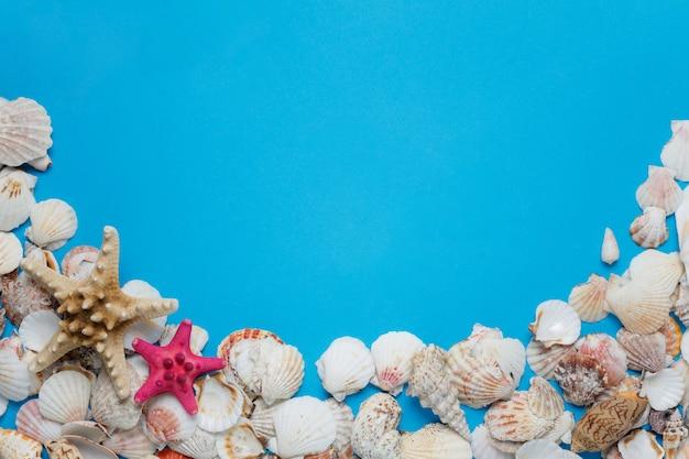 カラフルなヒトデ海貝殻自然コレクション