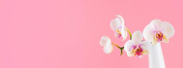 ピンクのガラスの花瓶に白い胡蝶蘭のバナー