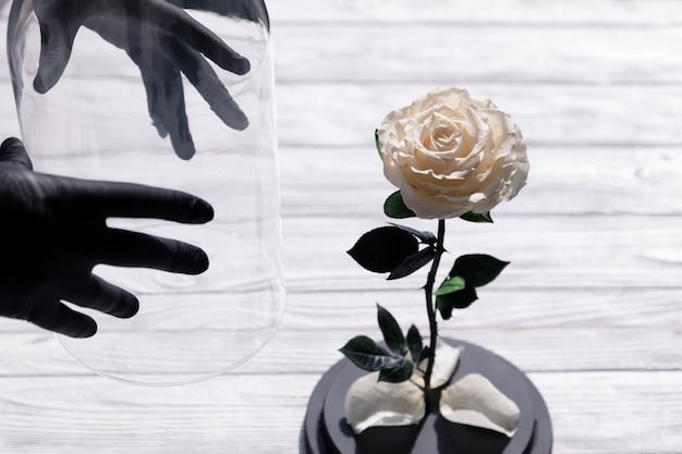 ガラスフラスコに白いバラを置く人