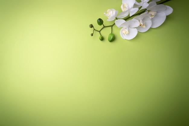 緑の背景に白い小枝の蘭の花、テキストのための場所。ファッション、化粧品、スキンケア用のカード。上からのコントラストビュー。