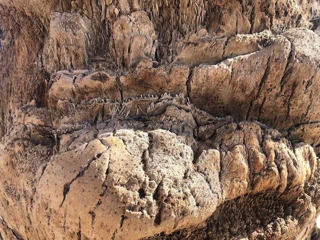 Текстура пальмы