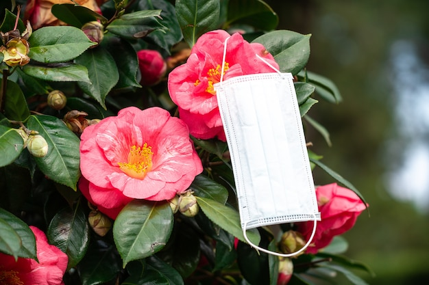 季節性アレルギー。花粉および開花に対するアレルギー反応。アレルギーの概念