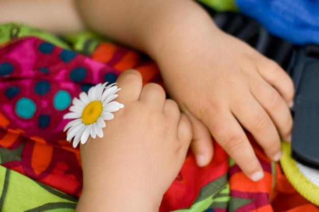子供の手にカモミールの花