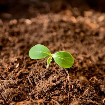 土壌から生長する植物