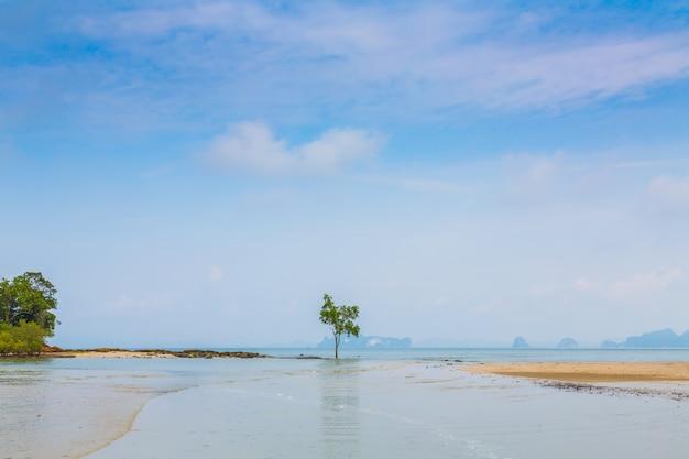 Одинокое дерево на берегу моря