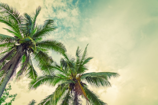下からのビーチのヤシの木