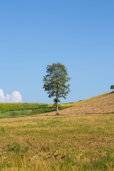 Дерево и голубое небо