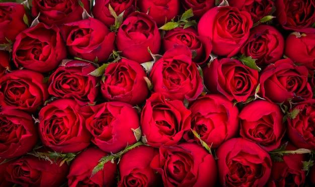 Фон красные розы