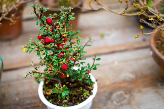 小さな盆栽の木