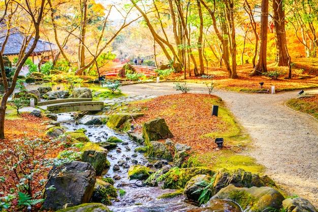 川と秋の森