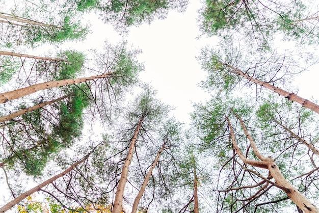 高い野生動物の森山頂