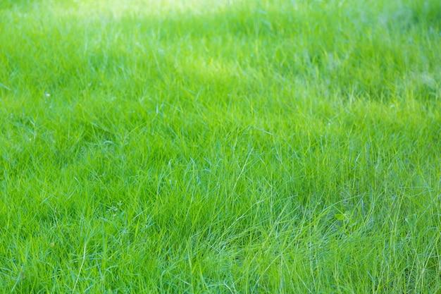 緑と新鮮な草の背景