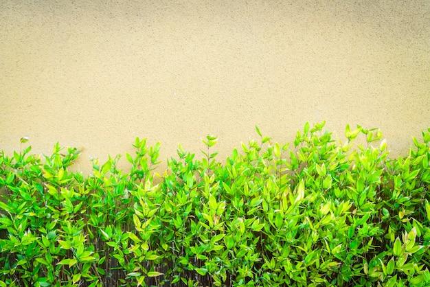 低木クロール植物のツタのコンクリート