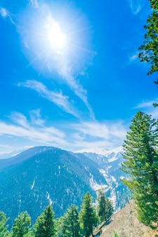 Красивое дерево и заснеженные горы пейзаж кашмирское государство, индия
