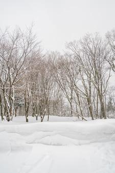 森の山で冬の嵐の日に雪で覆われた木