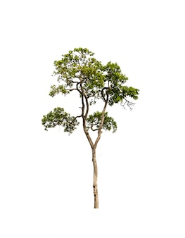 白い背景を持つツリー