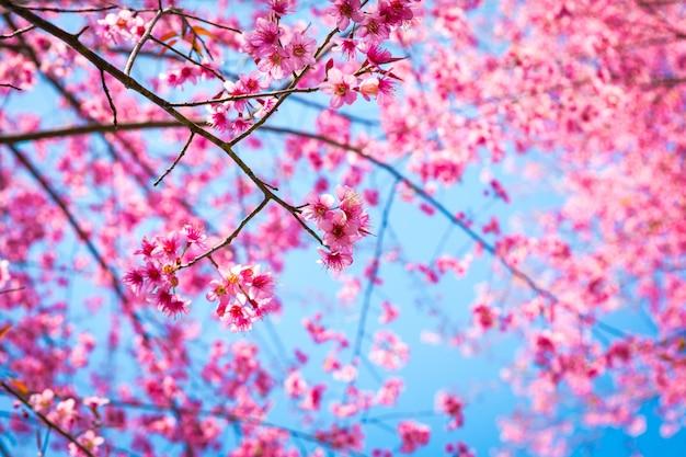 ピンクの花と枝のクローズアップ