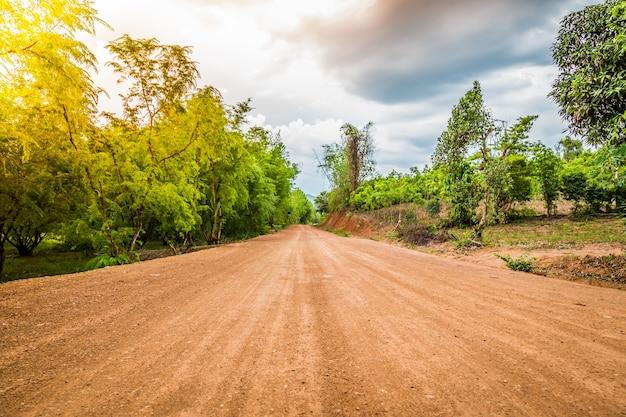 森の中の未舗装の道路