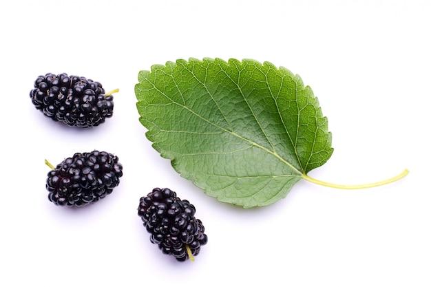 Листья шелковицы и три свежие сочные ягоды шелковицы