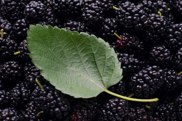 Зеленый лист шелковицы лежит на спелых темных сочных шелковицах