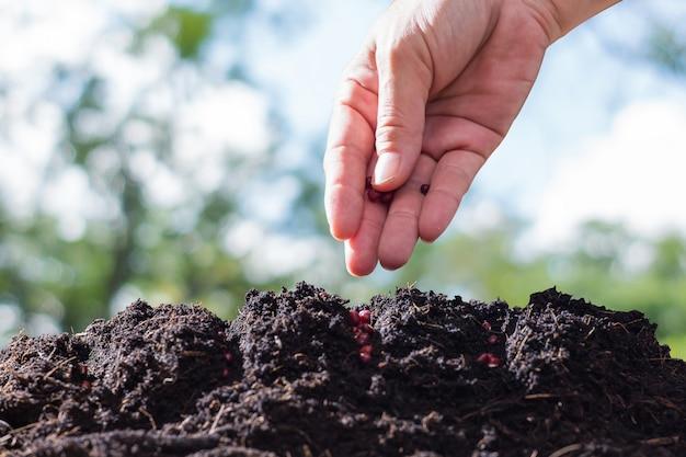 農家は土壌に種を植えている。
