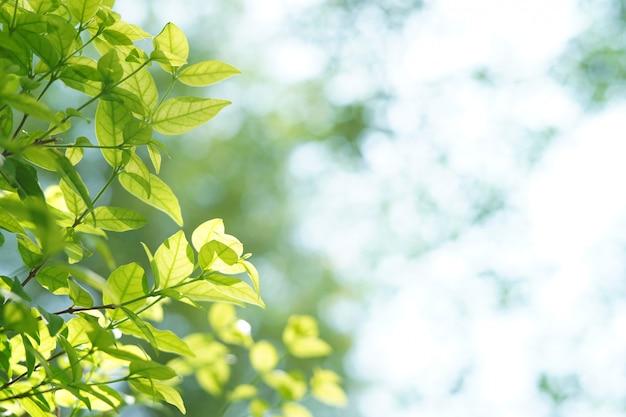 日光の下で夏の木の枝。