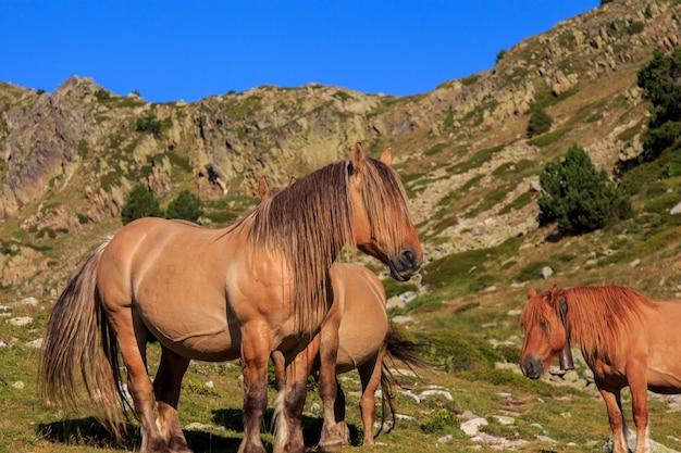山の長い髪の茶色の馬。